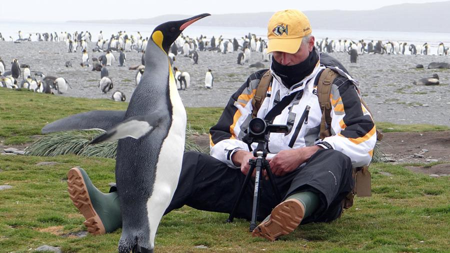 King Penguin-South Georgia