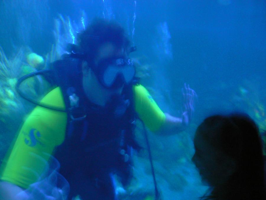 Diving in the EPCOT Living Seas aquarium