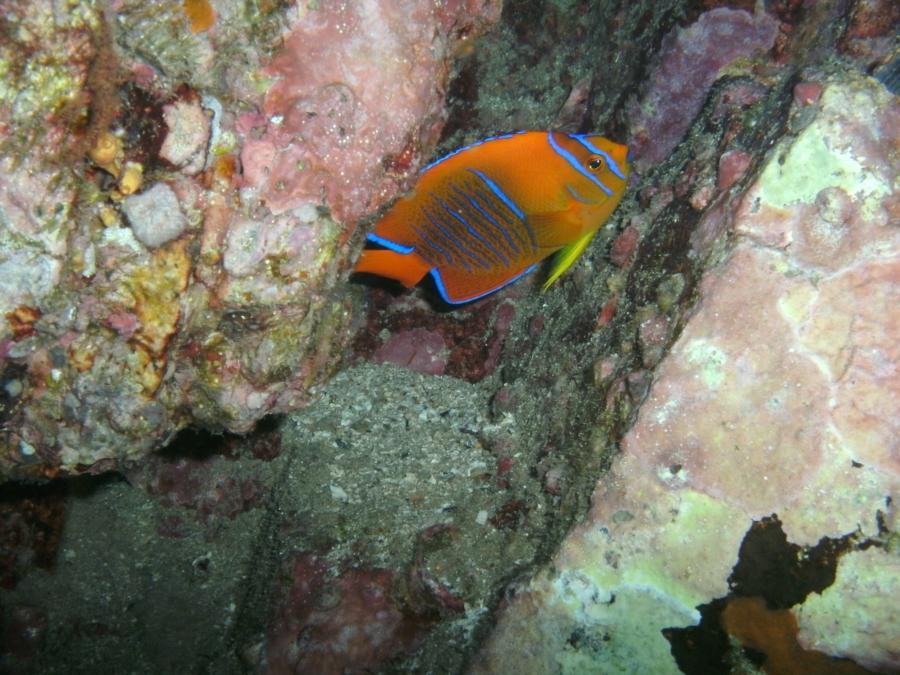 Reef Angel, Cabo San Lucas