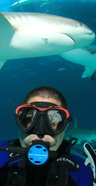 Shark Feeding Stuart Cove Nassau Bahamas