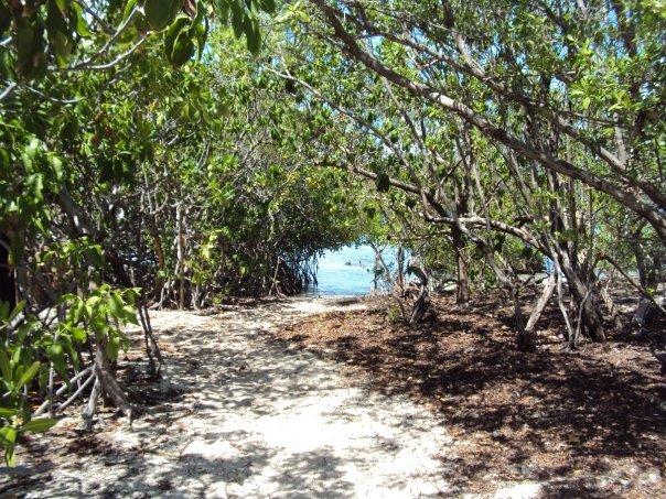 mangroves at gilligan's island