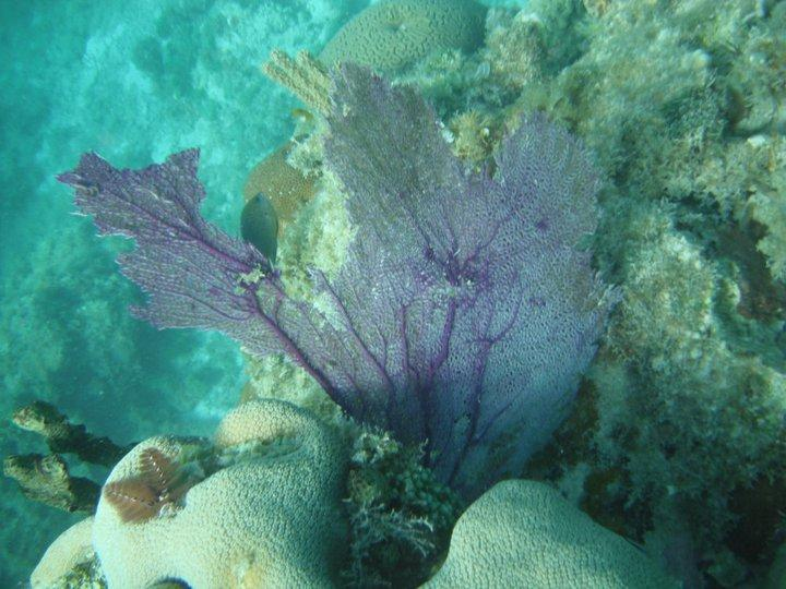 Beautiful fan coral and other colorful corals