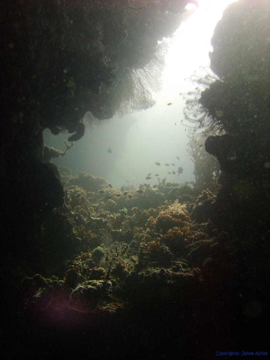 Menjangan Island Marine park, Bali