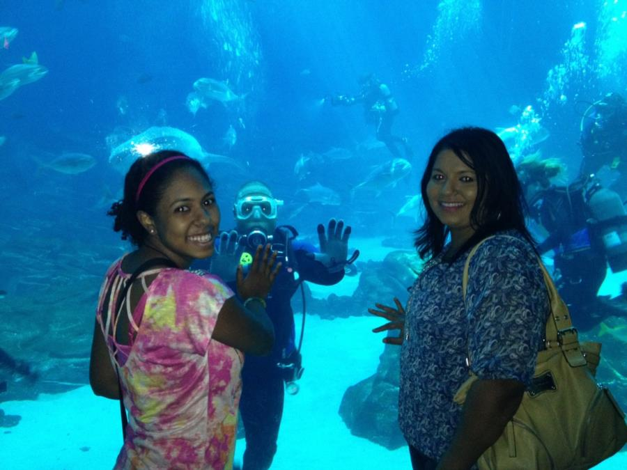Diving in the Georgia Aquarium Ocean Voyager Tank