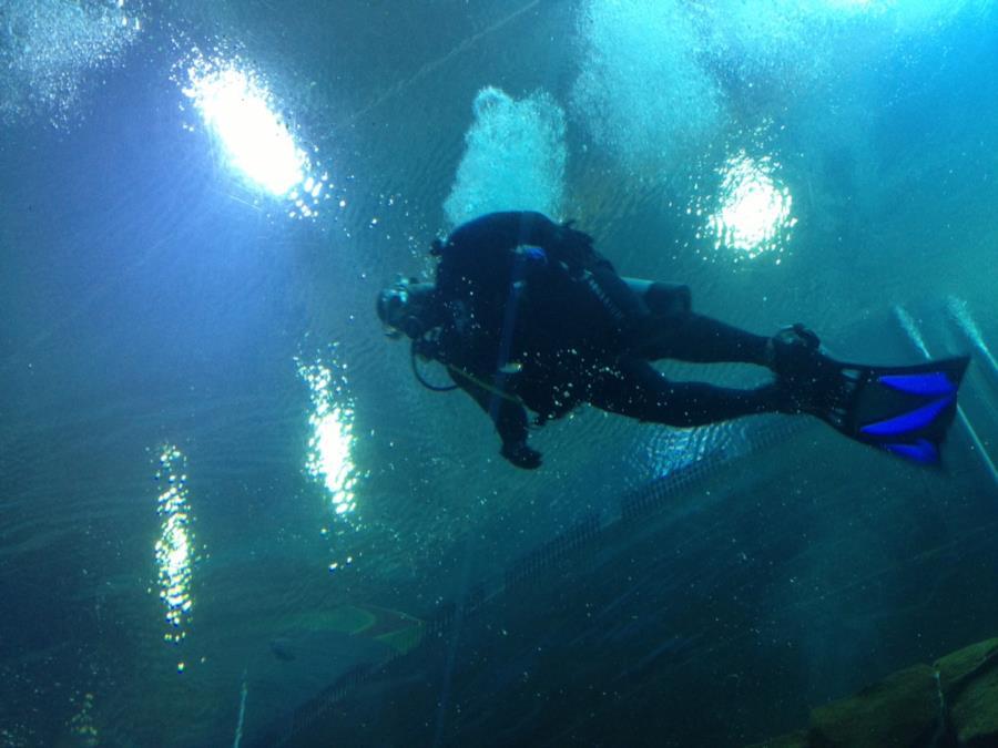 Over the tube in the Georgia Aquarium