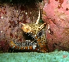 My first Dragon Moray