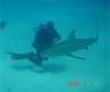 Shark Time, WooHoooo