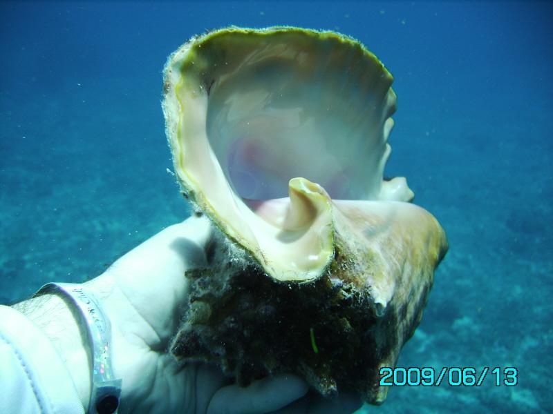 Conch Shell - Cozumel 2009