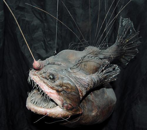 Angler Fish ...uh no thank you.
