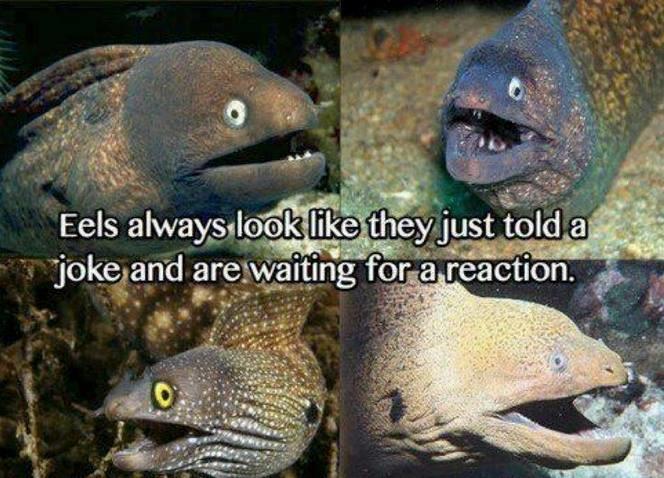 Eels telling jokes