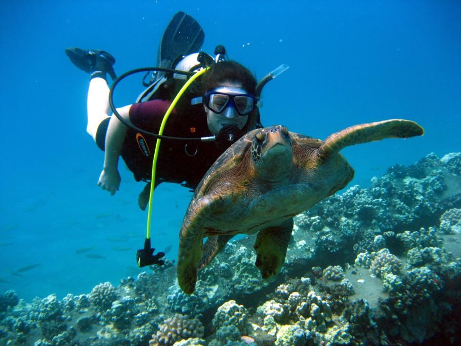 Friendly dive buddies