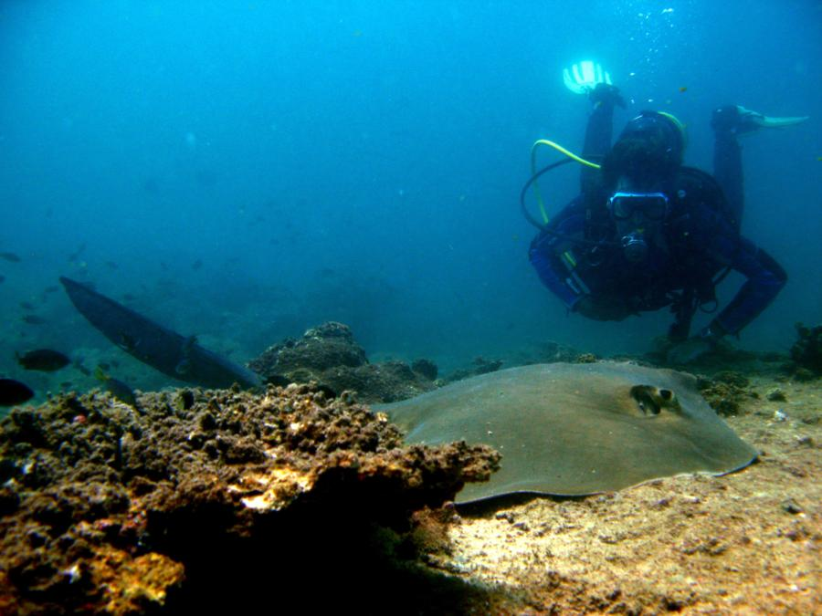 Patrik with Stingray, Fahal island, Oman