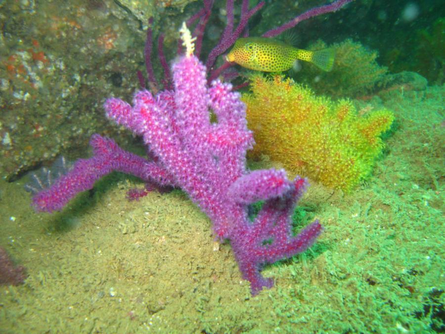 reef, Oman
