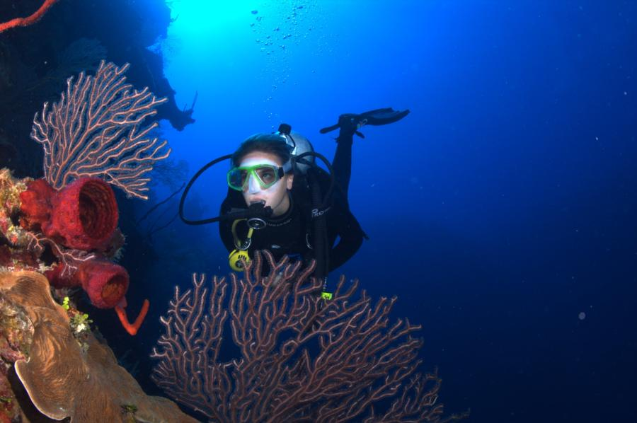 Cayman Wall Diving - photo credit Mike Nelson of Bone-Dry Photo