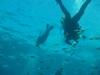 Wanna race? Sea Lion, Seal Island - San Carlos, Mexico