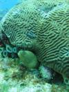 Eel and Brain Coral