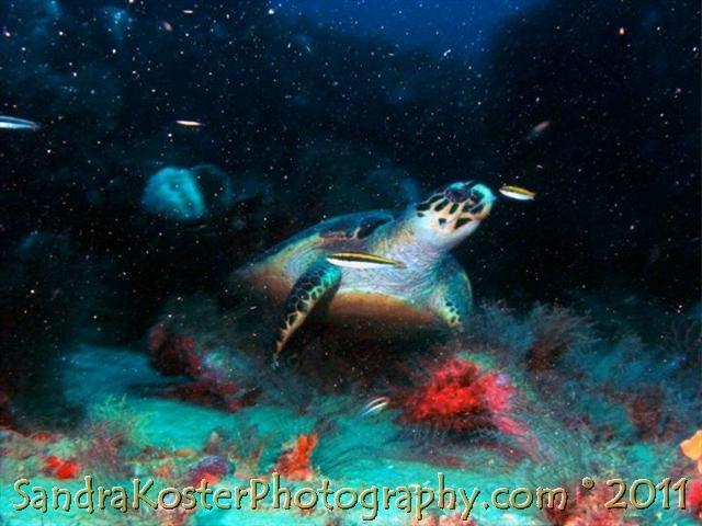 Sea Turtle in Wreck