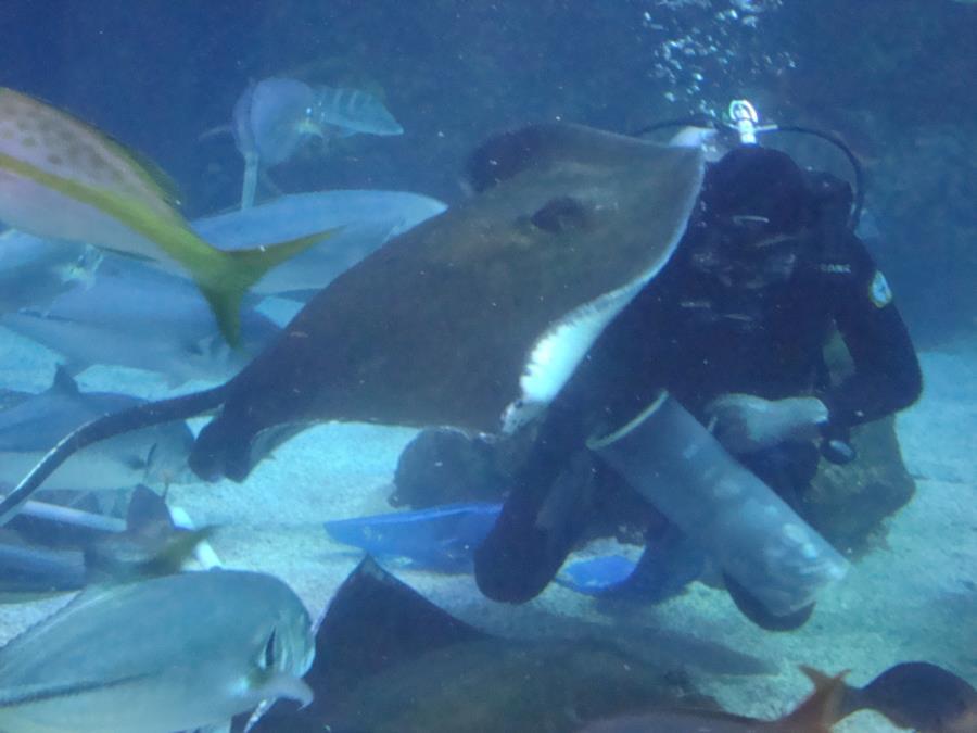 Feeding Time at the Denver Aquarium #3
