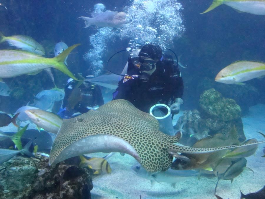 Feeding Time at the Denver Aquarium #5