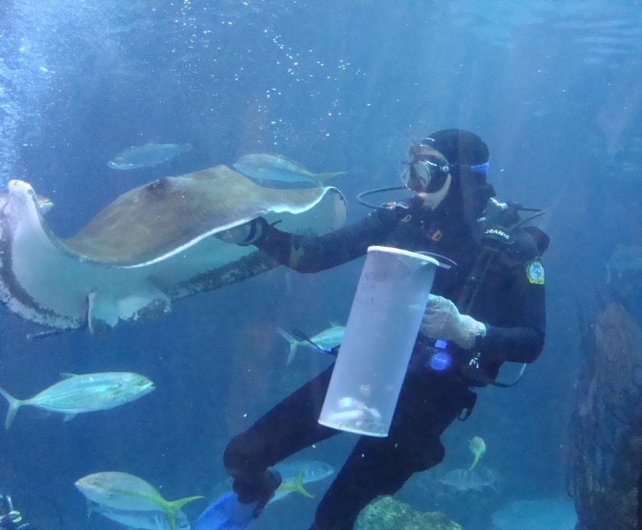Feeding Time at the Denver Aquarium #6