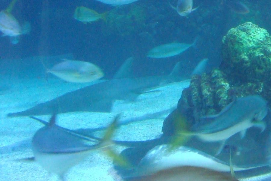 Shovelnose & Ray at the Denver Aquarium