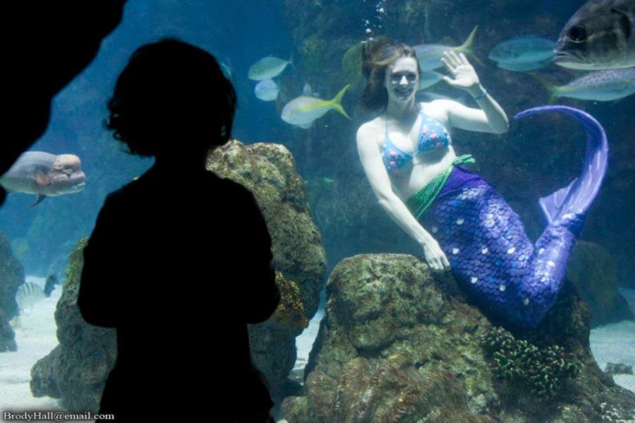 Mermaid at the Denver Aquarium