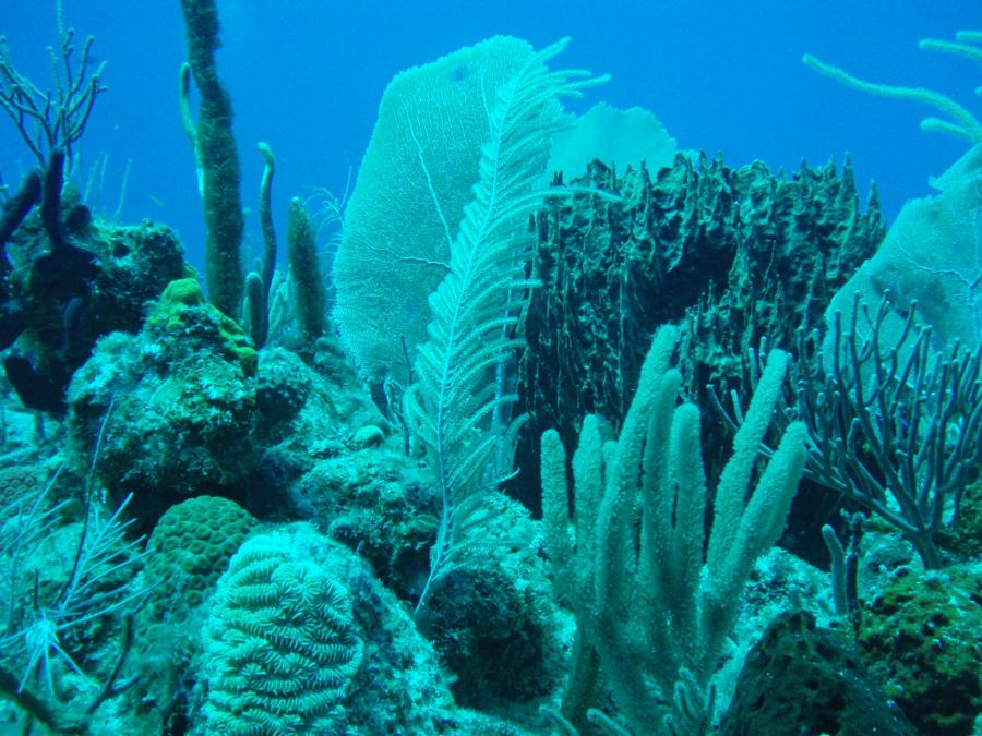 Diving in Guanica PR-2