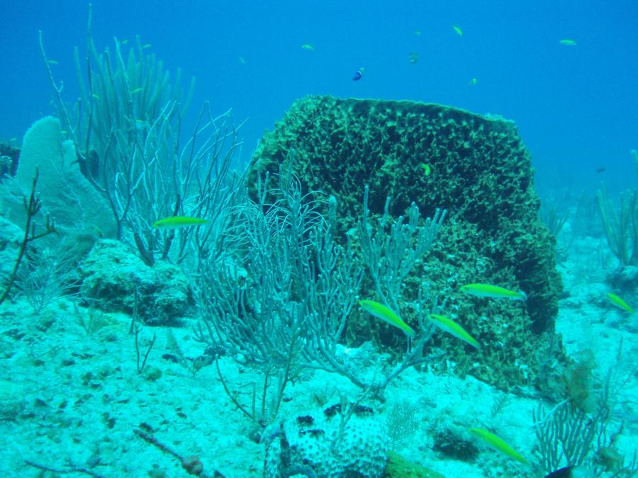 Diving in Guanica PR-3