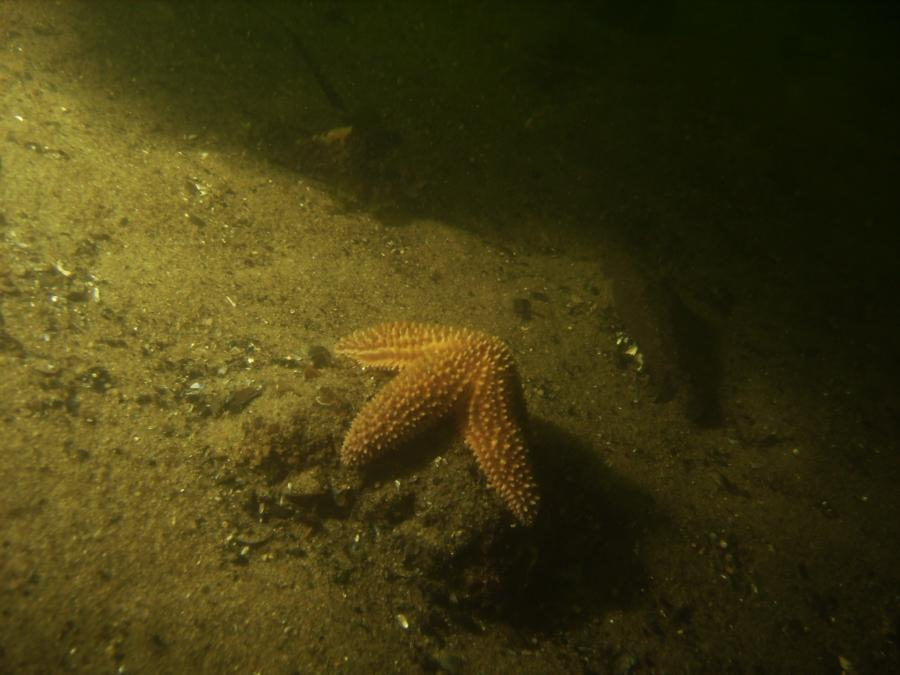 Starfish Pt. Pleasant RR Bridge