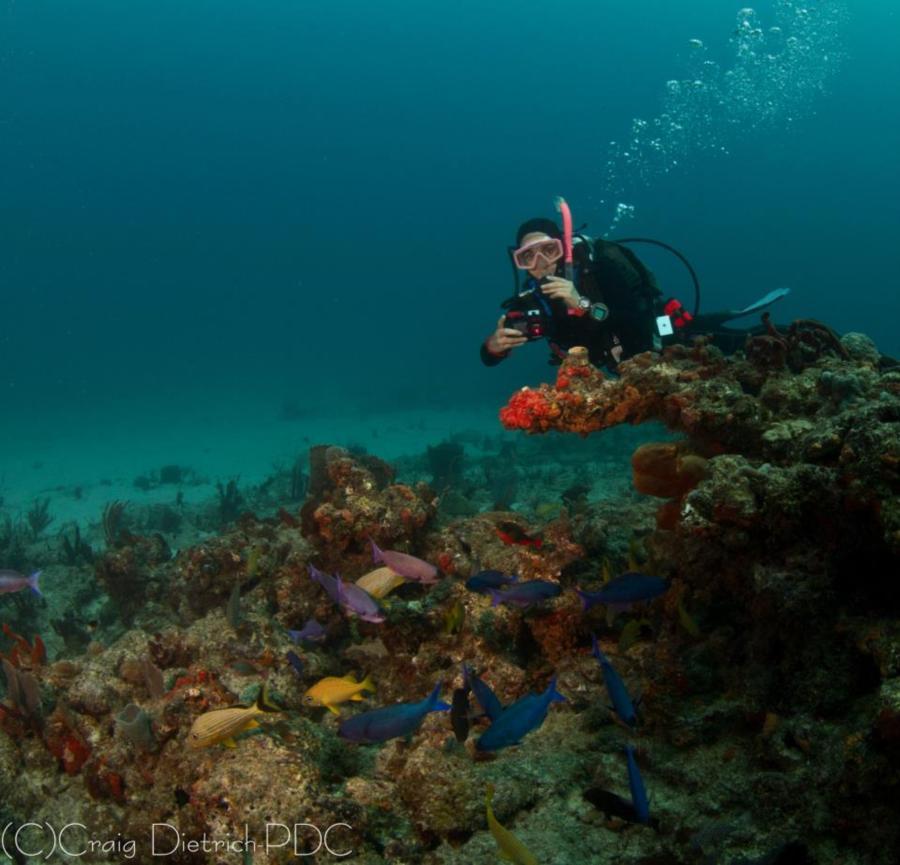 Dive Buddy Maria, Sanctuary Reef