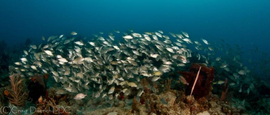 Sanctuary Reef