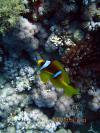 Shark Reef, Ras Mohammad, Eygpt