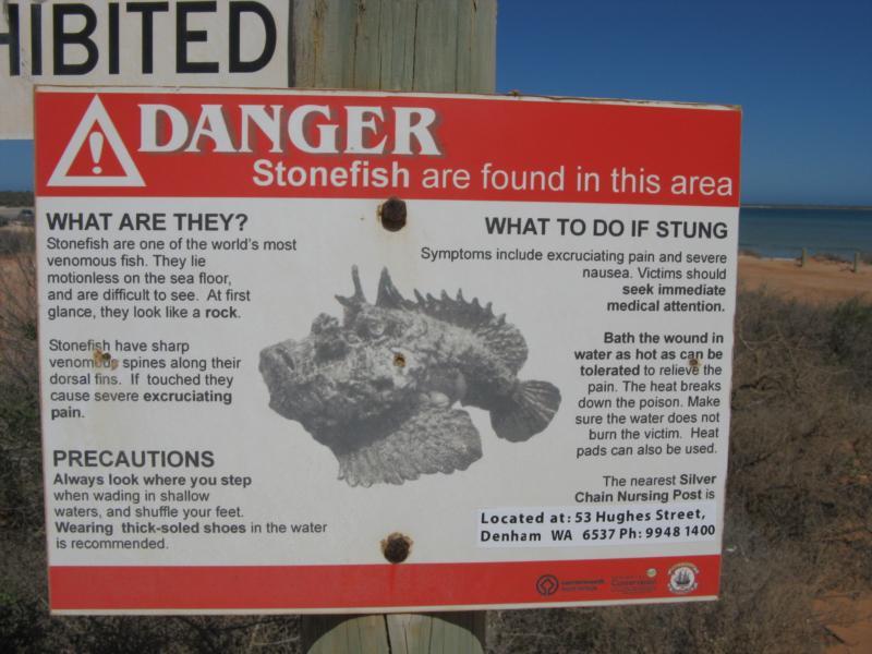 Stone Fish Warning