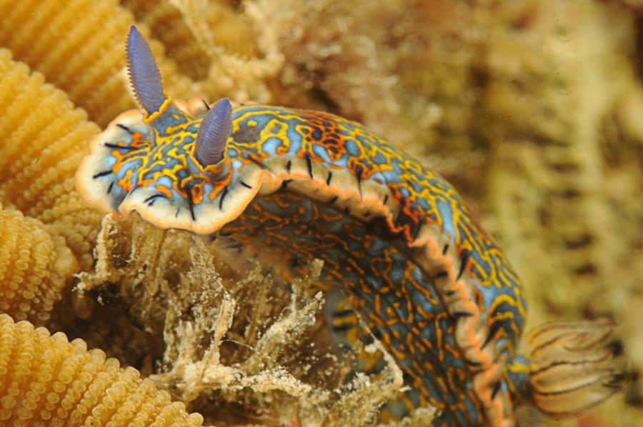 Nudibranch Diving Puerto Rico