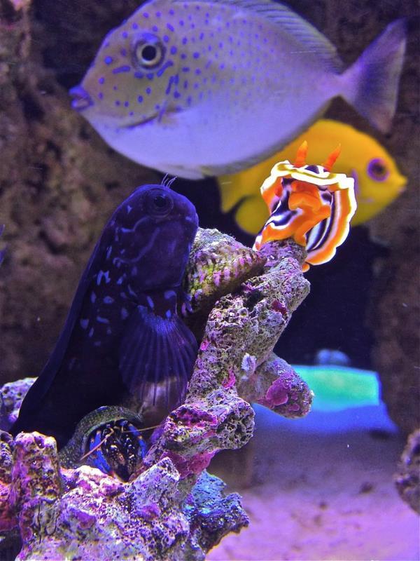 Fish posing for me (my aquarium) ;)