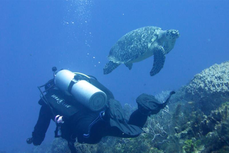 Big turtle & diver