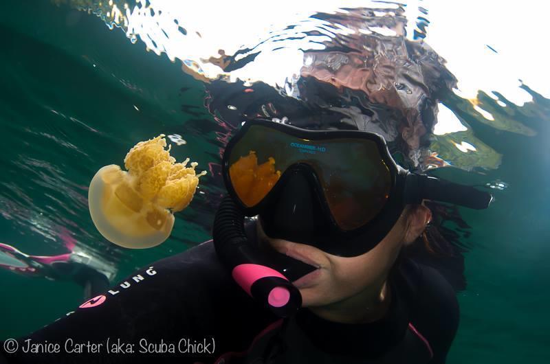 Jellyfish lake - Palau