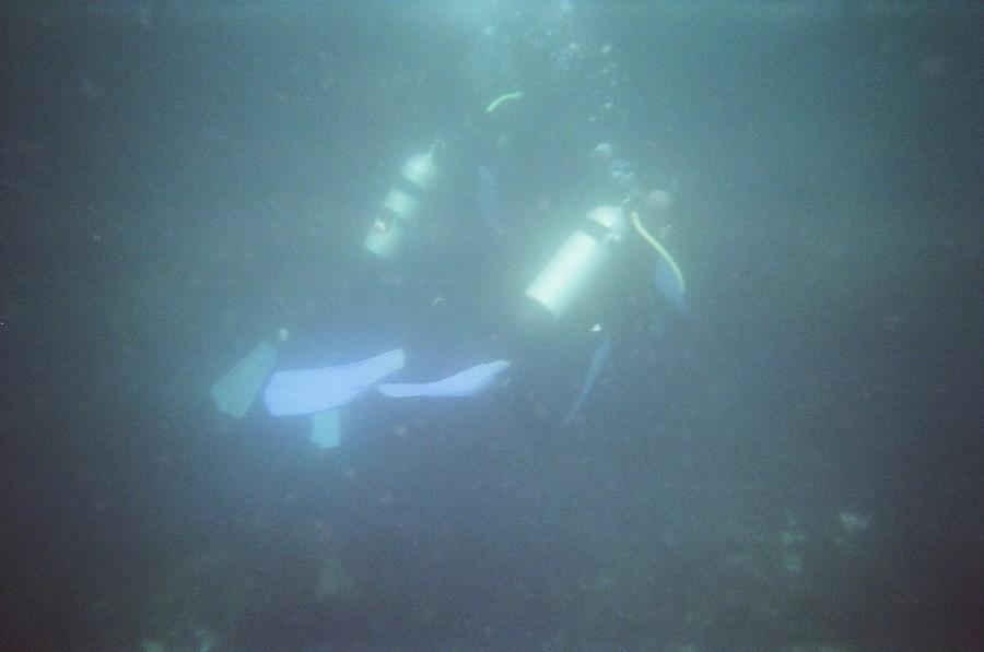 La Jolla Divers