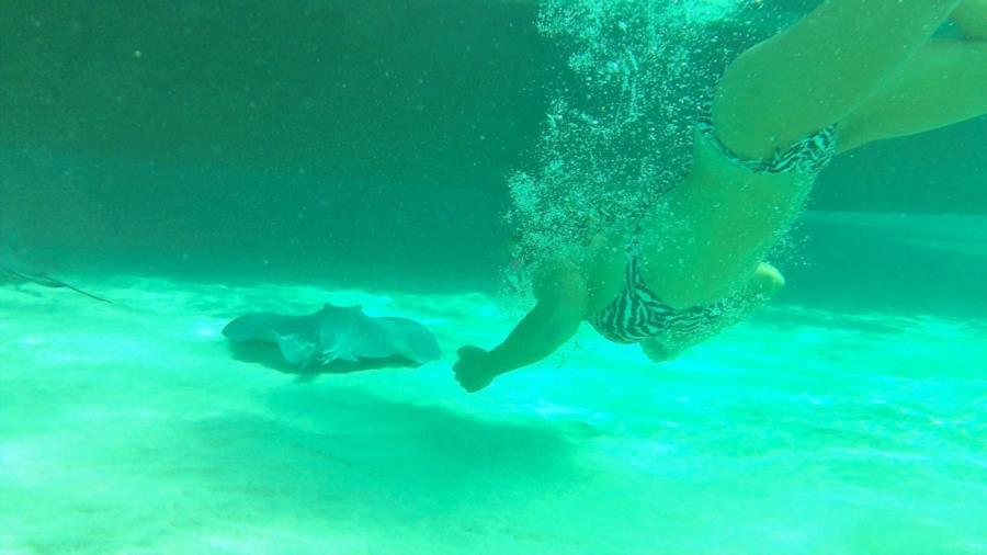Sting Ray City Grand Cayman