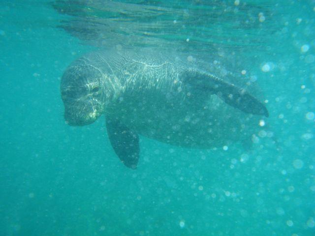 Monk Seal, Honokowai Point, Maui