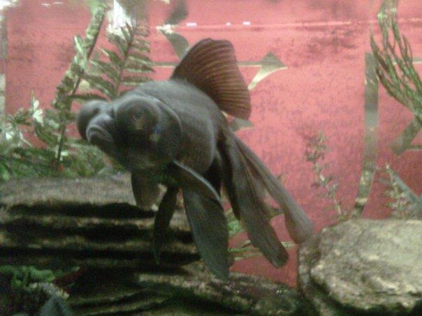 Here fishy fishy!
