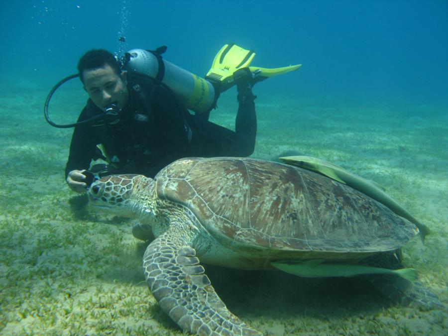 RED SEA /Egypt Marsa Alam /Turtles Bay