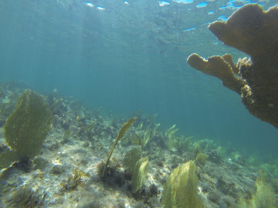 beautiful Grand Caymans