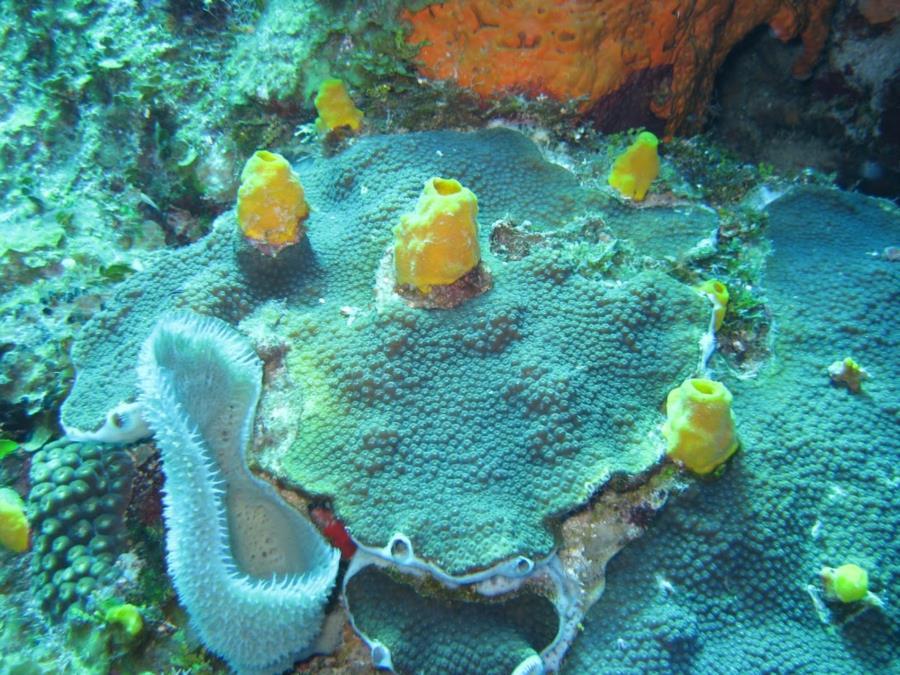 christianhgc's Reef Photo Roataan, Honduras 2012