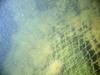Netting - scubadave