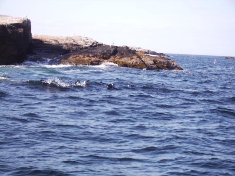 Seals, Is of Shoals
