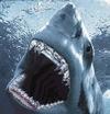 Grilled Shark