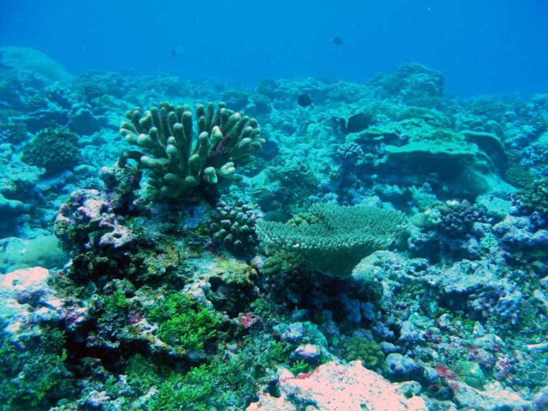Tangiers Reef, Palmyra Atoll