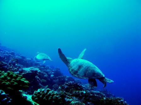 Palmyra Turtle Cruise