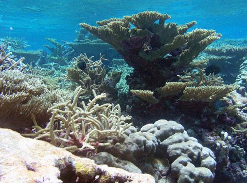 Tortugonias reef, Palmyra Atoll